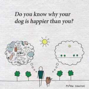 Why Your Dog is Happier than You